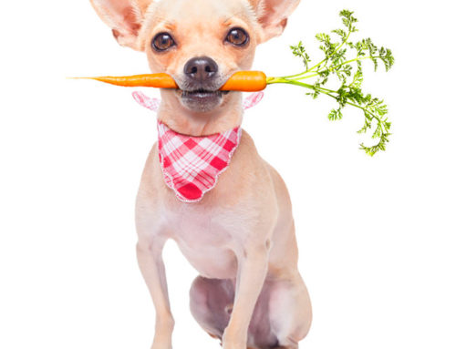 Diet: The Foundation for a Successful Holistic Pet Care Plan