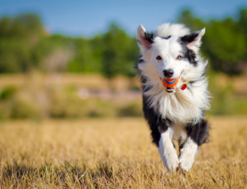 5 Goals for Developing a Holistic Health Pet Plan